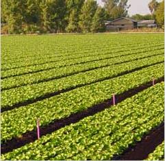 آزمایشگاه زراعت و باغبانی